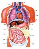 太极拳运动与呼吸生理 - 双丰收 - 双丰收博客小屋