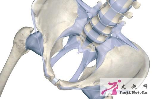 腰胯部骨骼结构图片